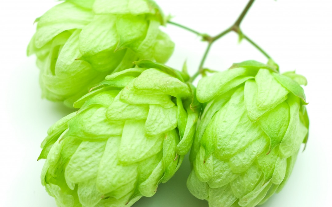2014 Hop Harvest Database